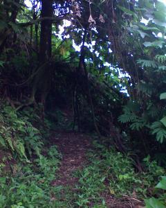 terowongan alami